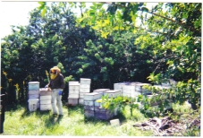 Fruitwood Orchards Bee Yard
