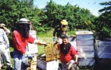Fruitwood Orchards Bees