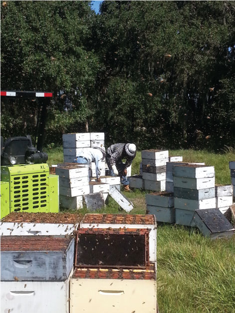 Fruitwood Orchards Truckload of Bees